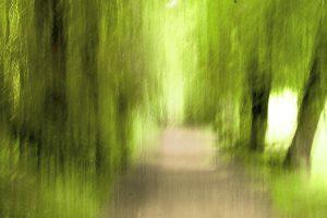 Galerie Ahlemann zeigt ein abstraktes Foto von Claudia Maria Weiser in grünen und braunen Farbtönen, welches einen Weg durch einen Wald oder eine Allee erahnen lässt.