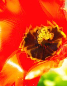"""Galerie Ahlemann zeigt ein abstraktes Foto von Claudia Maria Weiser in überwiegend orangen Farbtönen, auf dem die Markoaufnahme einer leicht """"verwischt""""-wirkenden Blüte zu erkennen ist."""