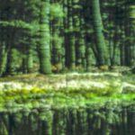 Galerie Ahlemann zeigt ein abstraktes Foto von Claudia Maria Weiser in überwiegend dunkleren Grüntönen, die in der unteren Hälfte durch waagerecht verlaufende weiße und gelb-grüne Farbtöne durchbrochen werden.