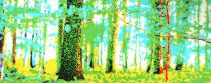 Galerie Ahlemann zeigt ein abstraktes Foto der Fotokünstlerin Nicki Garz in überwiegend grünen, gelben und weißen Farbtönen. Es sind schemenhaft Baumstämme eines Waldes zu erkennen, wobei die meisten Bäume vom unteren Bildrand nach oben aus dem Bild herauswachsen, so dass nur ungefähr ein Drittel des Baumes zu sehen ist. Die Darstellung ist farblich mit hellen Grün- und Türkistönen verfremdet. Die Konturen der Bäume verschwimmen und vermitteln einen surrealen Eindruck.