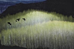 Galerie Ahlemann zeigt ein abstraktes Foto von Petra Jaenicke in überwiegend weißen, gelben und schwarzen Farbtönen. Das Bild besteht aus drei großen Ebenen. Wobei die ersten beiden Ebenen in hellen Farbtönen gehalten sind und schemenhaft eine dichte Baumreihe erkennen lassen, während die letze Ebene in dunklen bzw.schwarzen Farben einen schemenhaften Bergrücken darstellt. Im Vordergrund der zweiten Ebene sind vier Tauben in schwarz zu erkennen, die eine scherenschnittähnliche Anmutung haben.