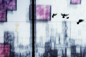Galerie Ahlemann zeigt ein abstraktes Foto von Petra Jaenicke in schwarzen, weißen und violetten Farbtönen, auf dem vier auffliegende Tauben (im rechten oberen Teil ) vor einer schemenhaften Skyline zu sehen sind.