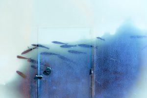 Galerie Ahlemann zeigt ein abstraktes Foto von Petra Jaenicke in überwiegend blauen Farbtönen, auf dem man schemenhaft einen Schwarm Fische erkennt, der von rechts nach links schwimmt, wobei der Hintergrund die Wand eines Bootes mit Tür zu sein scheint.
