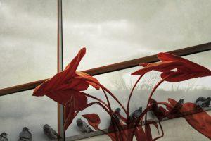 Galerie Ahlemann zeigt ein abstraktes Foto von Petra Jaenicke in überwiegend grauen und roten Farbtönen. Den Vordergrund dominiert eine langstielige Grünpflanze mit großen Blättern, die in roter Farbe dargestellt ist. Das Rot wird in der unteren Hälfte der Pflanze transparent,, um das im unteren Drittel von links unten in das Bild laufende, wie ein Rohr anmutendes Gebilde im unteren Drittle schräg nach rechts aus dem Bild laufend, sichtbar zu machen. Darauf sitzen aufgereiht neun Tauben. Dieser Teil des Bildes ist in grauen Farben gehalten. Zur Begrenzung des linken Drittels läuft eine breite Linie senkrecht von unten, sich noch oben leicht verjüngend durch das Bild. Die Linie hat links einen roten Rand, in der Mitte einen breiteren grauen Bereich und rechts einen schwarzen Rand. Der Hintergrund ist in hellen Grautönen gehalten und zeigt schemenhaft eine mit Sträuchern bewachsene Landschaft, während die anderen zwei Drittel aus einem bewölkten Himmel bestehen. Parallel zu dem Rohr mit den Tauben läuft im mittleren Drittel ein Balken von links unten nach rechts oben aus dem Bild. Dieser Balken hat die gleiche Farbgebung, wie die senkrechte Linie, ist aber etwas breiter und die Farben sind dunkler, als würden sie im Schatten liegen.