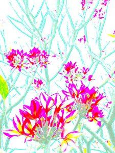 Galerie Ahlemann zeigt ein abstraktes Foto der Fotokünstlerin Nicki Garz in bunten Farben, das einen Teil einer Plumeria zeigt, dessen Zweige in türkis dargestellt werden.