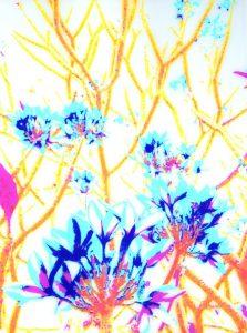 Galerie Ahlemann zeigt ein abstraktes Foto der Fotokünstlerin Nicki Garz in bunten Farben, das einen Teil einer Plumeria zeigt, dessen Zweige in gelb dargestellt werden.