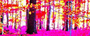 Galerie Ahlemann zeigt ein abstraktes Foto der Fotokünstlerin Nicki Garz in überwiegend grünen, gelben und weißen Farbtönen. Es sind schemenhaft Baumstämme eines Waldes zu erkennen, wobei die meisten Bäume vom unteren Bildrand nach oben aus dem Bild herauswachsen, so dass nur ungefähr das untere Drittel der Bäume zu sehen ist. Die Darstellung ist farblich mit überwiegend pinken sowie gelben und roten Farbtönen verfremdet. Die Konturen der Bäume verschwimmen und vermitteln einen surrealen Eindruck.