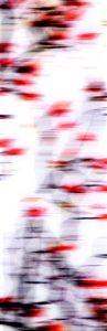 Galerie Ahlemann zeigt ein abstraktes Foto der Fotokünstlerin Nicki Garz in schwarzen und roten Farben vor weißem Hintergrund, welches einen abstrahierten, wie verschwommenen Magnolienzweig darstellt.