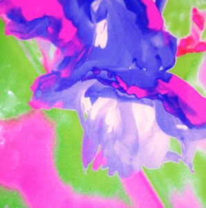 Galerie Ahlemann zeigt ein abstraktes Foto der Fotokünstlerin Nicki Garz mit einer abstrahierten Tulpenblüte in den überwiegenden Farben pink und grün.