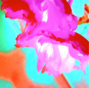Galerie Ahlemann zeigt ein abstraktes Foto der Fotokünstlerin Nicki Garz mit einer abstrahierten Tulpenblüte in den überwiegenden Farben rosa und türkis.