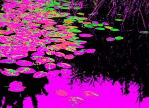 Galerie Ahlemann zeigt ein abstraktes Foto der Fotokünstlerin Nicki Garz in überwiegen violetten und schwaren Farben. Das Foto zeigt einen abstrahierten Ausschnitt eines Seerosenteiches, wobei die Seerosenblätter überwiegend violett sind, teilweise durch die Komplementärfarben Grün und Orange durchbrochen.