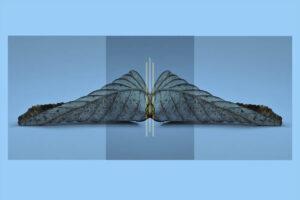 Galerie Ahlemann zeigt ein abstraktes Foto des Fotokünstlers Thomas Bienert in blauen Farbtönen auf dem mittig ein gespiegeltes Laubblatt zu sehen ist, welches von an der Schnittstelle von drei dünnen, hellen Linien durchbrochen wird.