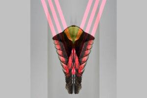 Galerie Ahlemann zeigt ein abstraktes Foto des Fotokünstlers Thomas Bienert auf dem ein mittig angeordnetes gespiegeltes vegetabiles Objekt vor einem grauen Hintergrund zu sehen ist, auf das von oben mittig rechts und links jeweils drei rosafarbene Streifen zulaufen,, die sich mittige in dem Objekt zu einer V-Form treffen.