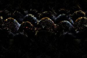 Galerie Ahlemann abstrakte Fotokunst Thomas Bienert ein von Schwarz dominiertes Motiv, auf dem wellenförmig angeordnetes, organisches Material durch dezenten Lichteinfall stellenweise hervorgehoben wird.